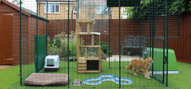 5 Reasons Your Cat Might Need A Portable Cat Enclosure
